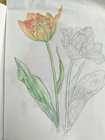 塗り絵の花